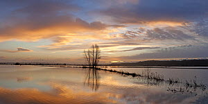 Panorama of floodwaters at sunrise, King's Sedge Moor near Othery, Somerset Levels, Somerset, UK. January 2014. Digital composite, larger file available. - John Waters