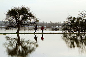 Walkers strolling along the bank between in flooded Aller Moor, with mistletoe laden apple tree, near Burrowbridge, Somerset Levels, Somerset, UK. January 2014  -  John Waters