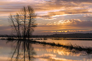 Flood water over the fields at King's Sedge Moor near Othery, Somerset Levels, Somerset, UK. January 2014 - John Waters
