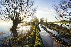 A half-flooded tractor track heading towards inundated farmland on West Sedgemoor near Stoke St Gregory. Somerset Levels, Somerset, UK. January 2014 - John Waters
