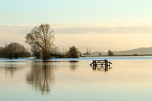 A solitary gate in calm flood-waters in farmland on West Sedgemoor, near Stoke St Gregory. Somerset Levels, Somerset, UK. January 2014  -  John Waters