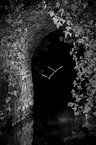 Bats (Microchiroptera) in flight, hunting insects under bridge, taken at night with infra red remote camera trap, Mayenne, Pays de Loire, France, August.  -  Eric  Medard