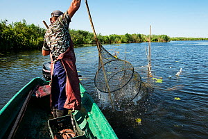 Danube Delta fisherman Florin Moisa shaking weed off traditional fyke nets, Danube Delta, Romania, June 2013.  -  Wild  Wonders of Europe / Lundgren
