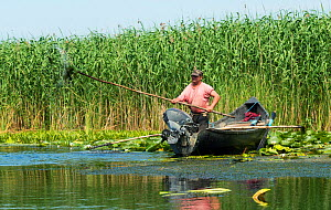 Traditional fisherman, Danube Delta, Romania, June 2013.  -  Wild  Wonders of Europe / Lundgren