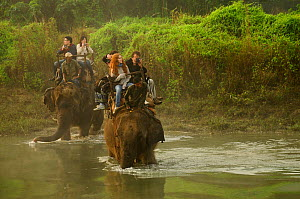Tourists riding on domestic Indian elephant (Elephas maximus) crossing Narayani River in the dawn mist during wildlife safari, Royal Chitwan National Park, Nepal. - Enrique Lopez-Tapia