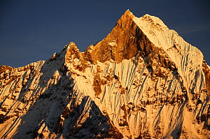 Mount Machapuchare( 6997m) at sunset. Annapurna Himal,  Annapurna Sanctuary, central Nepal, November 2011.  -  Enrique Lopez-Tapia