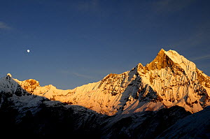 Mount Machapuchare ( 6997m) at sunset. Annapurna Himal,  Annapurna Sanctuary, central Nepal, November 2011.  -  Enrique Lopez-Tapia