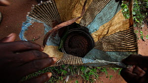 Hunters showing a Tree pangolin (Phataginus tricuspis) curled up in a sack to go to Bayanga market, Dzanga-Ndoki National Park, Sangha-Mbaere Prefecture, Central African Republic, May 2012. - Jabruson Motion