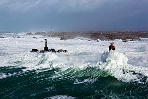 Rough seas during Storm 'Ruth', Ile d'Ouessant, Armorique Regional Park. Iles du Ponant, Finistere, Brittany, France, Iroise Sea. 8th February 2014.  France, Bretagne, Finistere, Mer d'Iroise, Iles du... - Benoit  Stichelbaut