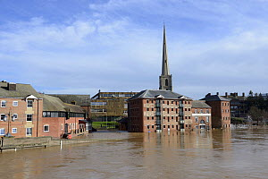 The River Severn in Worcester during the highest recorded floods, Worcestershire, England, UK. 13th February 2014,  -  Will Watson