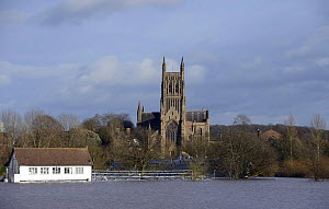 Worcester Cathedral during record breaking floods, St. John's, Worcester, Worcestershire, England,  13th February 2014.  -  Will Watson