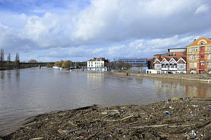 Landscape from upstream of Worcester Bridge during record breaking floods, with washed up debris, Worcestershire, England, UK, 13th February 2014.  -  Will Watson