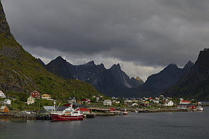 Looking across the harbour with boats and mountains, Norway Sea, Moskenesoya, Lofoten Islands, Norway, June.  -  Loic  Poidevin