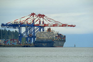 Container Ships, Prince Rupert Harbour, British Columbia, Canada, June 2013.  -  Loic  Poidevin