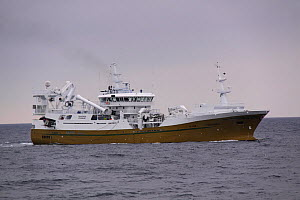 Norwegian purse seiner 'Teigenes' searching for shoals of herring on the North Sea, June 2013. All non-editorial uses must be cleared individually. - Philip  Stephen