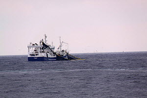 Norwegian pelagic vessel 'Osterbris' purse seining for herring on the North Sea, June 2013. All non-editorial uses must be cleared individually. - Philip  Stephen