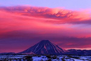 Mount Ngauruhoe at dawn, under steam and ash cloud issuing from Mount Ruapehu eruption. North Island, New Zealand.  -  Tui  De Roy