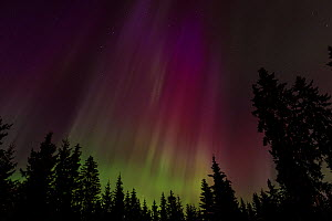 Northern Lights over forest, central Finland, March 2013 - Jussi  Murtosaari
