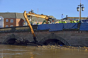 Crane removing the debris raft trapped by Worcester Bridge due to record floods, Worcestershire, England, UK. 16th February 2014.  -  Will Watson