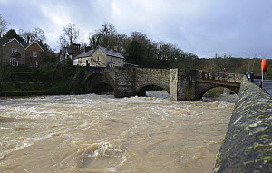 River Teme in spate flowing beneath Ludford Bridge, Ludlow, Shropshire, England, UK,  15th February 2014.  -  Will Watson