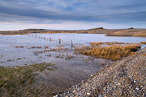 Flooded grazing marsh and breached shingle coastal defense after the 6 December east coast tidal surge, Cley NWT Reserve, Norfolk, England, UK, December 2013. - Gary  K. Smith