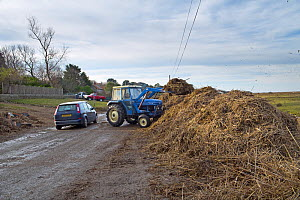 Tractor clearing tidal wrack and debris from a road after the 6 December east coast tidal surge, Salthouse, Norfolk, England, UK, December 2013. - Gary  K. Smith