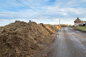 Piles of tidal wrack and debris next to a cleared road after the 6 December east coast tidal surge, Salthouse, Norfolk, England, UK, December 2013. - Gary  K. Smith