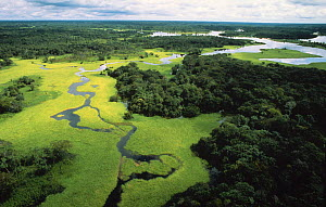 Aerial view of flooded forest or 'Varzea forest' during rainy season with floating plants, Rio Negro, Brazil. February 2010.  -  Michel  Roggo