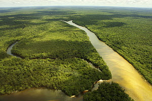 Aerial shot of Rio Branco, a tributary of the Rio Negro and flooded forest or 'Varzea forest', Amazon rainforest, Amazonas, Brazil. February 2011  -  Michel  Roggo