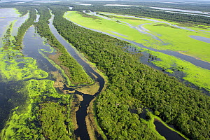 Anavilhanas Archipelago in the Rio Negro, surrounded by flooded forest or 'Varzea forest' Amazonas, Brazil. February 2011  -  Michel  Roggo