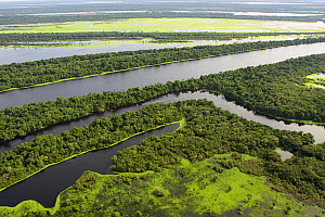 Anavilhanas Archipelago in the Rio Negro, and flooded forest or 'Varzea forest' Amazonas, Brazil. February 2011  -  Michel  Roggo