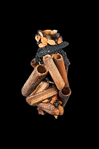 Caddisfly (Limnephilus sp.) case built of sticks, wood fragments, seeds, snail shells and plant stems, Germany, November.  -  Ingo Arndt