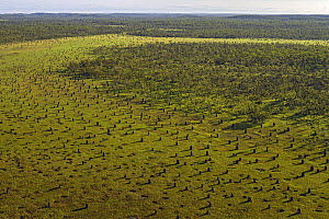 Magnetic termite (Amitermes meridionalis) aerial view of mounds in grassland, Litchfield National Park, Northern Territory, Australia.  For sale in the UK only.  -  Ingo Arndt