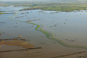 Aerial view of River Parrett with clearly defined banks / levees , during January 2014 flooding, Somerset Levels, England, UK, 9th January 2014.  -  David  Woodfall