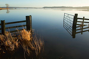 Farm gate reflected in waters of January 2014 floods, West Sedgemoor RSPB Nature Reserve, Somerset Levels, England, UK, 11th January 2014.  -  David  Woodfall