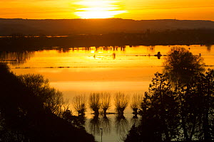 Flooded Somerset Levels at sunset, looking west from Burrows Mump during January 2014 floods, Somerset Levels, England, UK, 11th January 2014.  -  David  Woodfall