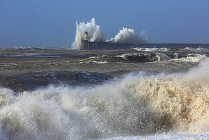Waves breaking over lighthouse at Newhaven Harbour wall viewed from Seaford, Sussex, England, UK, 15th February 2014.  -  Mark Taylor