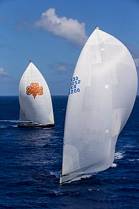 Two mega yachts with white spinnakers racing in the 2013 St. Barths Bucket Regatta, March 2013, Caribbean. All non-editorial uses must be cleared individually.  -  Onne van der Wal