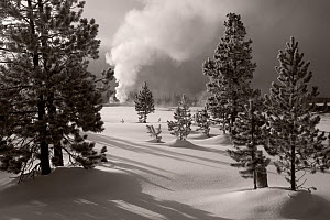 Black and white photograph of Old Faithful erupting in the Upper Geyser Basin of Yellowstone National Park, Wyoming, USA, February 2011.  -  Kirkendall-Spring