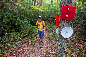 Man walking on Indian Creek Trail part of the Mountain-to-Sea Trail in Hanging Rock State Park. North Carolina, USA, October 2013. Model released. - Kirkendall-Spring