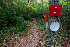 Trail sign markers along Indian Creek Trail part of the Mountain-to-Sea Trail in Hanging Rock State Park. North Carolina, USA, October 2013. - Kirkendall-Spring