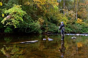 Alan McDonald  fishing below Hooker Falls in the DuPont State Forest, Transylvania County, North Carolina, USA, October 2013. Model released. - Kirkendall-Spring