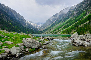 River flowing from Lac de Gaube, Pyrenees National Park, Hautes Pyrenees, France, July 2013. - Robert  Thompson