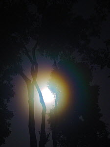 Moon and forest scenic at night with moon near Lokoue Bai. Odzala-Kokoua National Park, Republic of Congo. - Jabruson