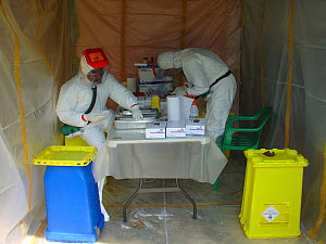 People in biohazard suits analysing blood samples to find the reservoir host of Ebola virus. Ebola Virus Disease in Mbomo killed 128 people in 2003 and in 2005 killed 95% of Odzala National Park's Wes...  -  Jabruson