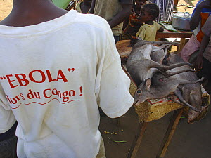 Blue Duiker (Cephalophus monticola) meat for sale at market. Mbomo, Odzala-Kokoua National Park, Republic of Congo, May 2005, with  Man wearing 'Ebola hors du Congo' t-shirt during Ebola virus outbrea... - Jabruson