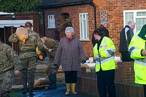 Army, residents and Environment Agency staff in flooded street after February 2014 flooding, helping to provide support for the residents, Chertsey, Surrey, England, UK, 16th February 2014.  -  David  Woodfall