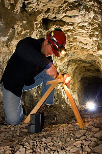 Biologist installing a motion sensor in the abandoned Smoking Dump gold mine to help scientists understand why sensitive bat species like Townsend big-eared bats (Corynorhinus townsendii) use the mine... - Michael Durham