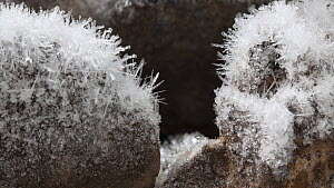Timelapse of frost forming on rocks, controlled conditions, Somerset, England, UK.  -  Alastair MacEwen