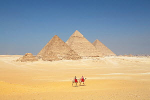 Men riding camels in front of the Pyramids of Giza, UNESCO World Heritage Site, Egypt, October 2010. - Aflo